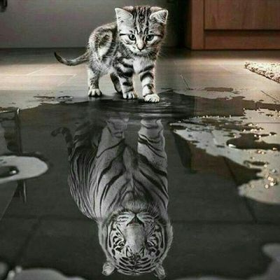 false reflection